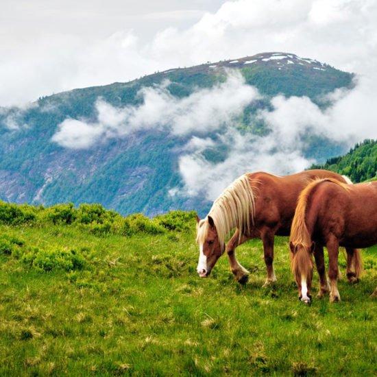val pusteria a cavallo 2